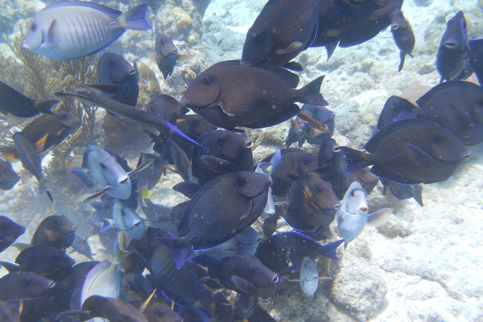 School of Tangs